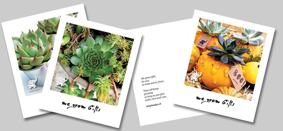 kaarten vetplantjes huisstijl